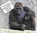 mlm-recruiting-tips-gorilla